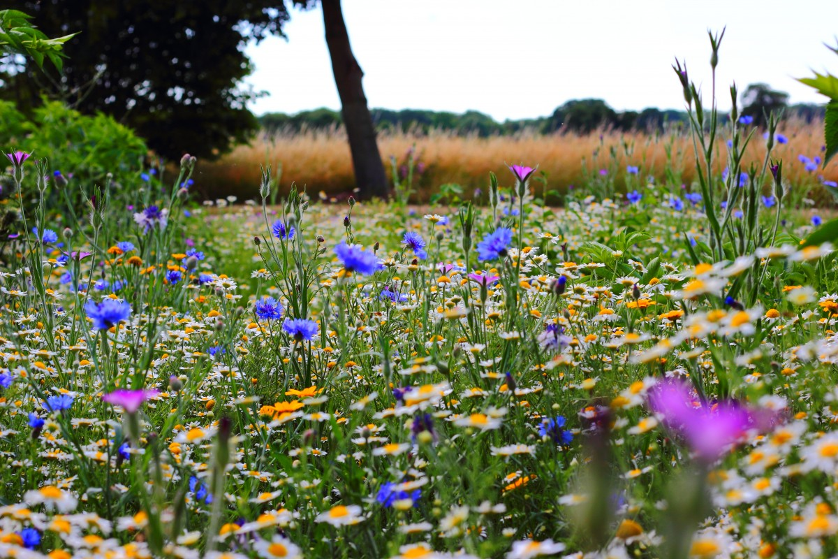 Wildflowers Meadow