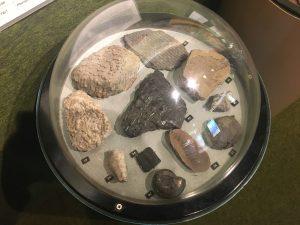 Carboniferous Fossils