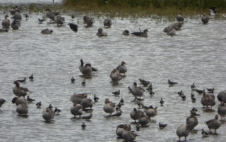Waterbirds on North Cave lagoon by Marg Smith